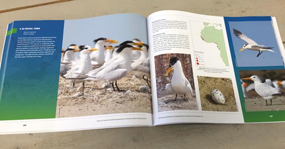 Rapporten Vogelbescherming Nederland 3